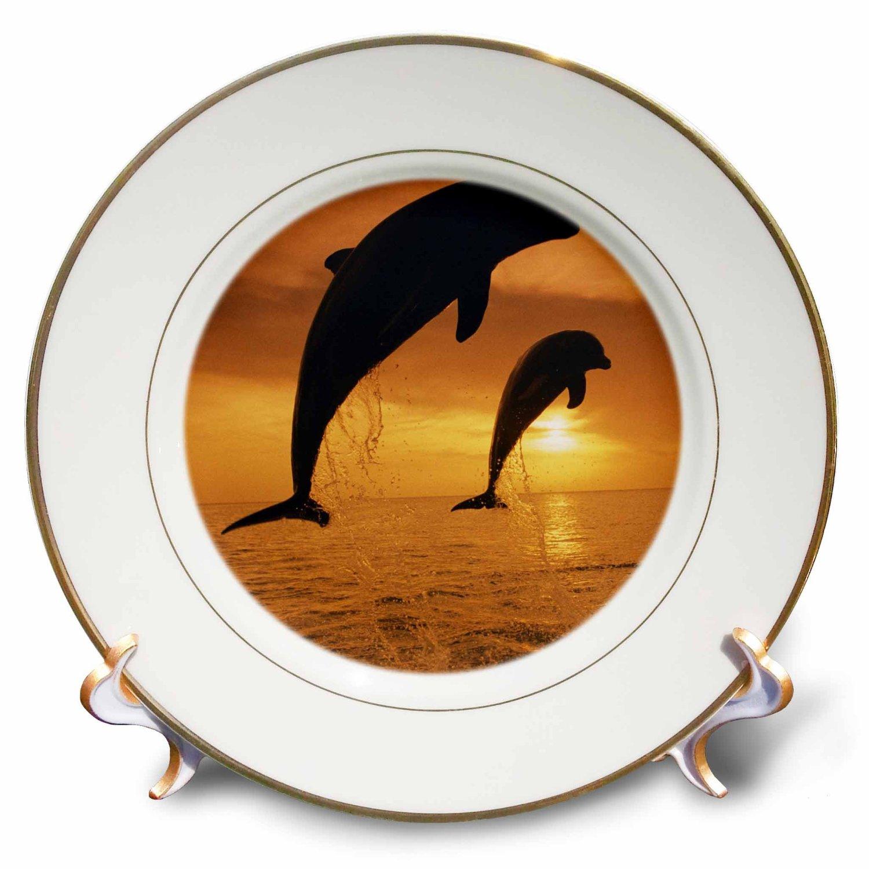 Danita Delimont - Dolphins - Caribbean, Bottlenose Dolphin, Tursiops Truncatus, - 8 inch Porcelain Plate (cp_228459_1)