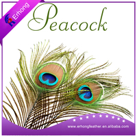 Factory supply top quality peacock feather