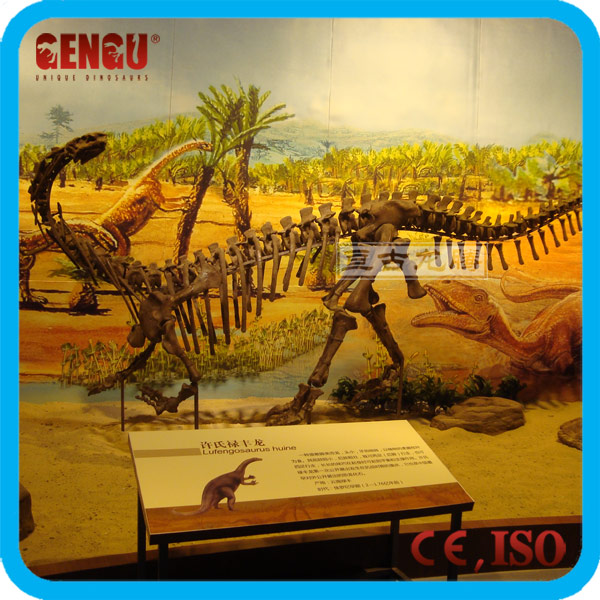 Museum Life-size Dinosaur Fossil Replica