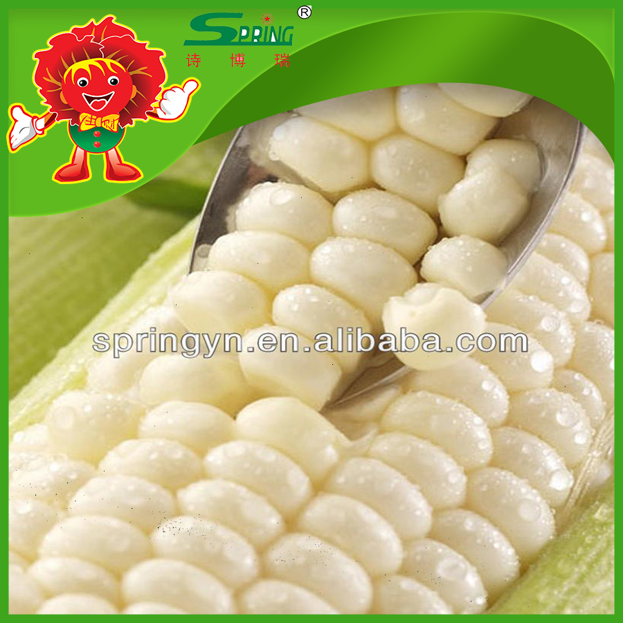 Premium quality packed corn Fresh yellow maize purple corn