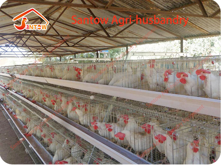 Factory Cheap Price 15 Years Using Nepal Galvanized Poultry Cage Layer  Chicken Cages - Buy 15 Years Using Chicken Layer Cage,15 Years Using  Galvanized