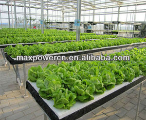 greenhouse cultivation NFT hydroponic system