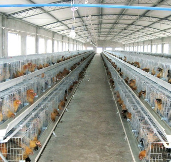 wholesale Professional alloy material laying broiler chicken cage