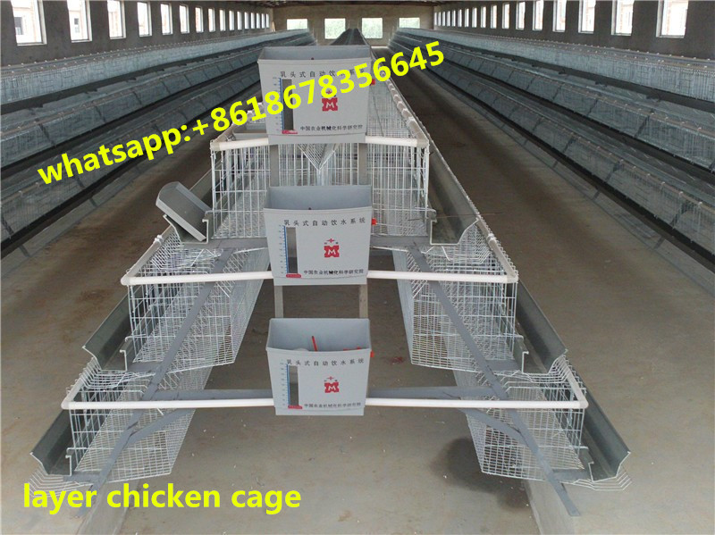 High quality stainless steel wire A type chicken cage for layer chicken cage