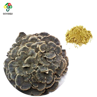 2019 Best Selling Wild Turkey tail mushroom powder