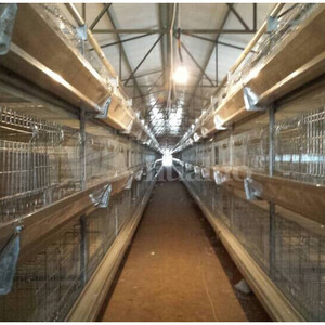 China supplier chicken farm building battery cages laying hens
