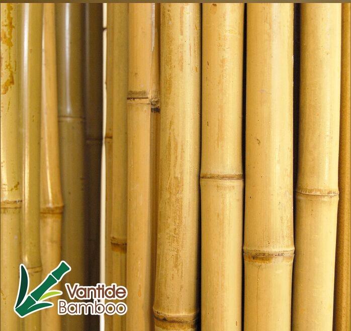tokin cerca de bamb para el jardn