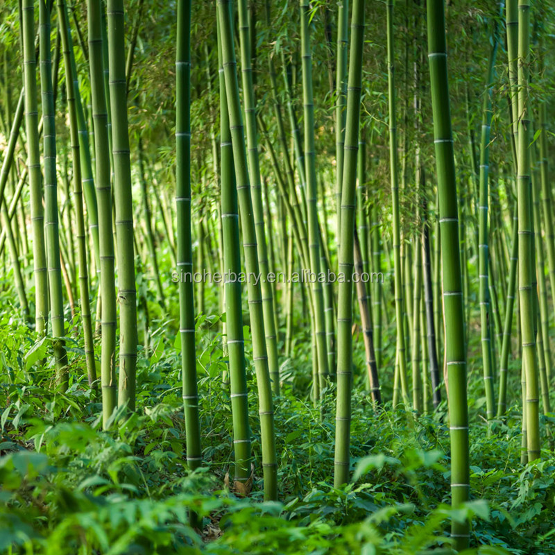 Best Quality New Fresh Moso Bamboo Seeds For Planting - Buy Seed  Prices,Seed Flower,Bonsai Seed Product on Alibaba com