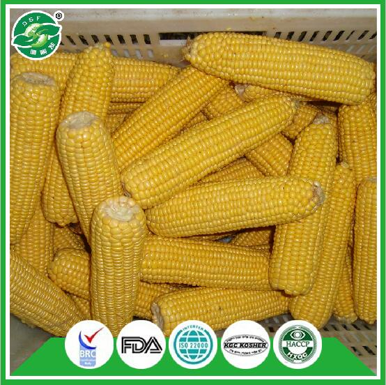 professional hot selling bulk iqf frozen sweet corn for sale