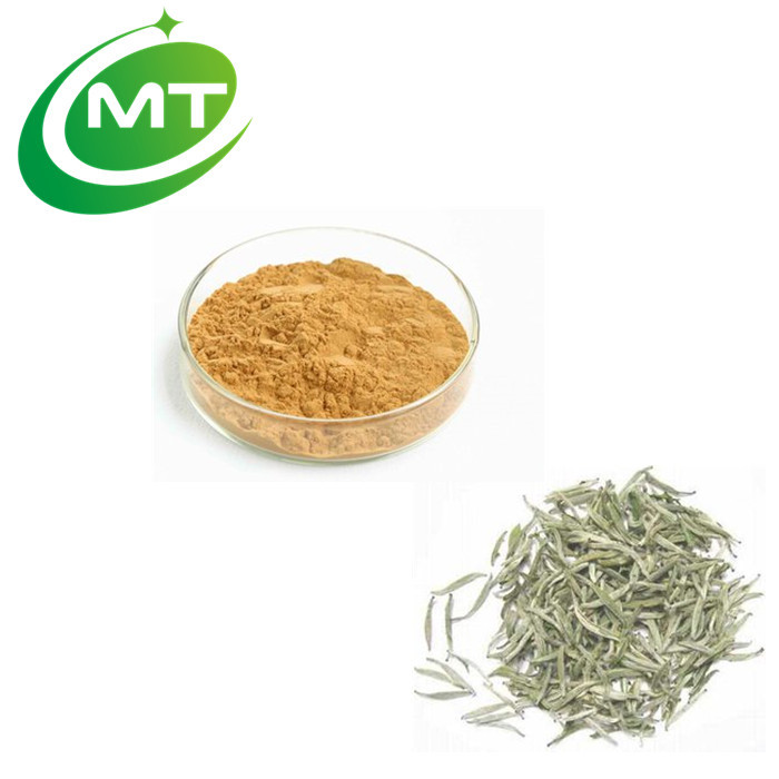 High quality 40%Polyphenols White Tea Extract - 4uTea | 4uTea.com