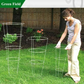 Wire Growing Tomatoes Plant Cages