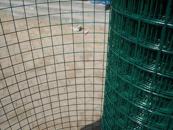 Galvanized Square Welded Wire Mesh / Chicken Coop Square Wire Mesh ...