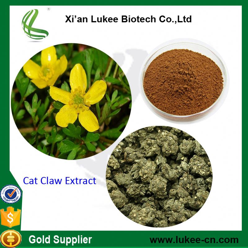 Supply Plant extract Cat's Claw Dry Extract Alkaloids 2%,3%, 5%