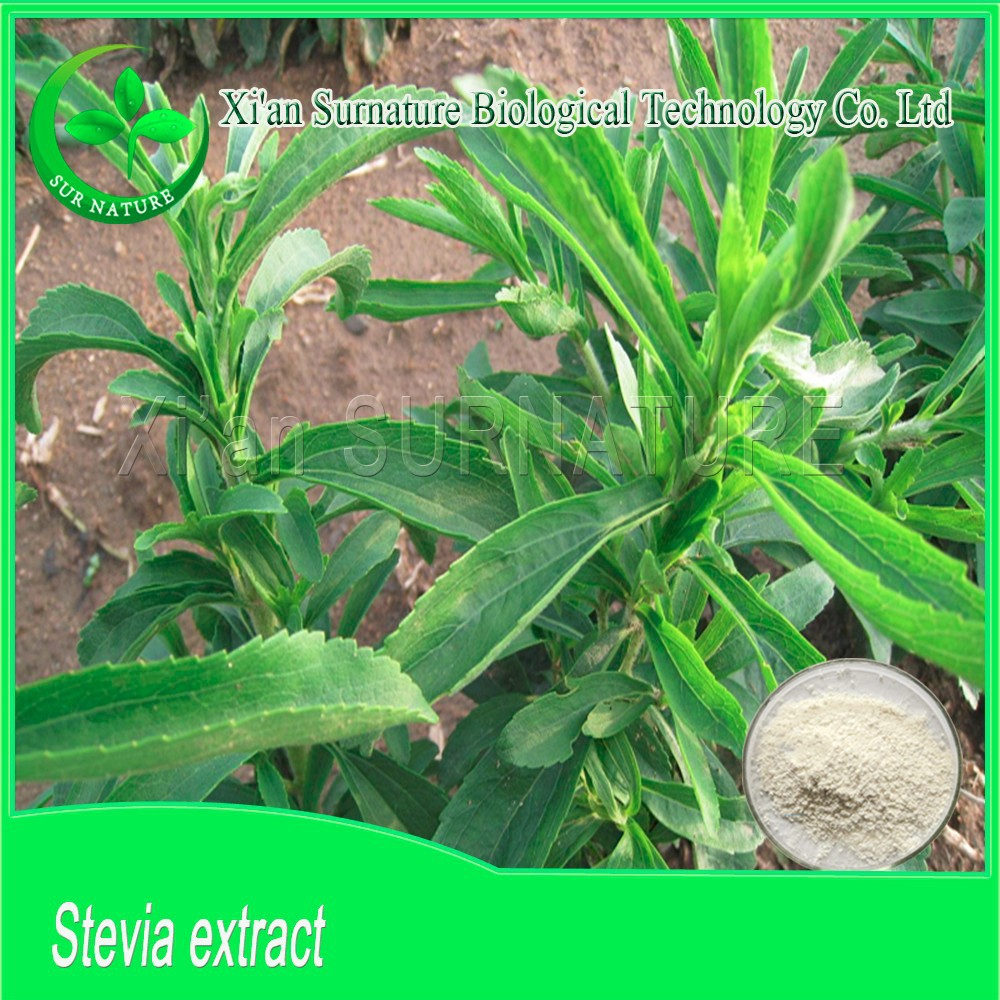 buyers of stevia extract powder in bulk