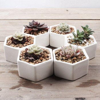 Whole Small White Hexagon Ceramic Flower Pots For Succulent Plants
