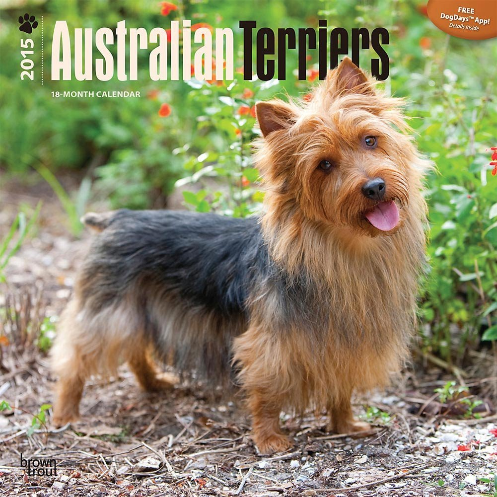 Australian Terriers 2015 Wall Calendar