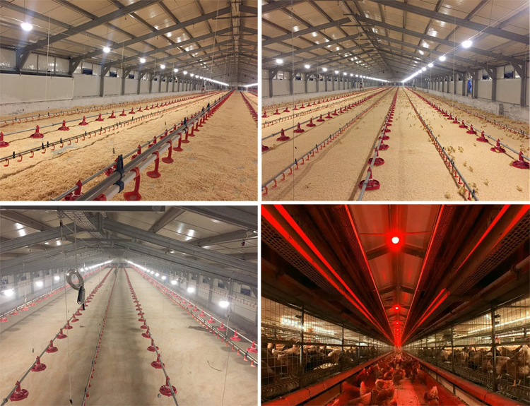 Automatic En Farm House Led Poultry Lighting System In Hot Systems Light