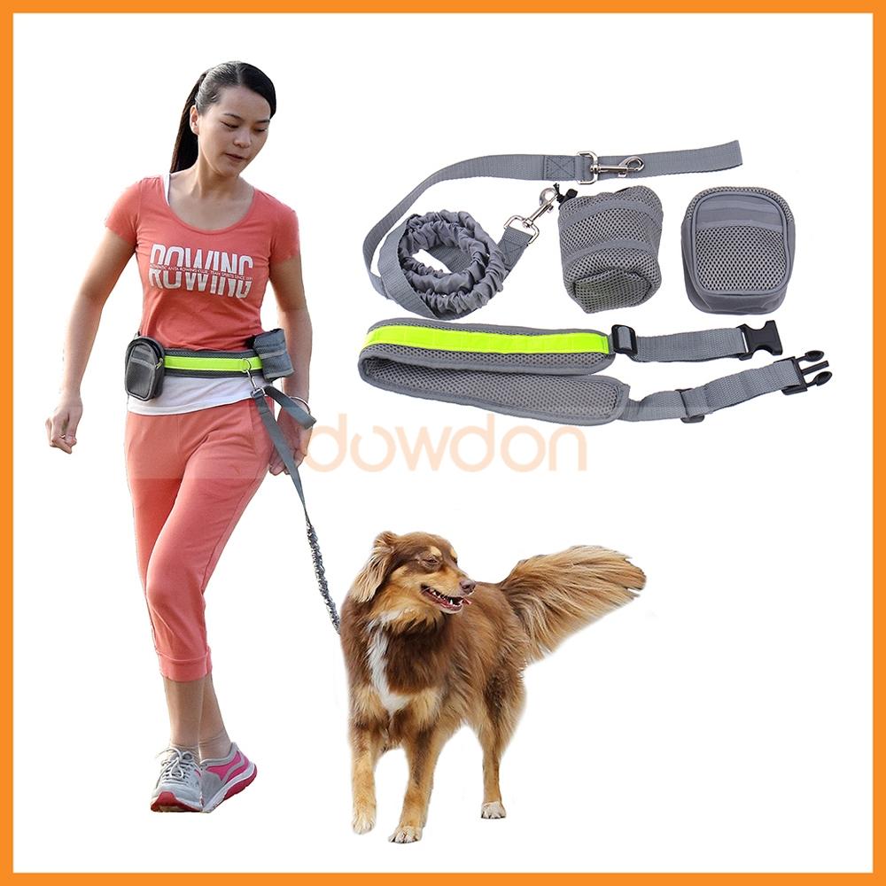 dog walking forms free