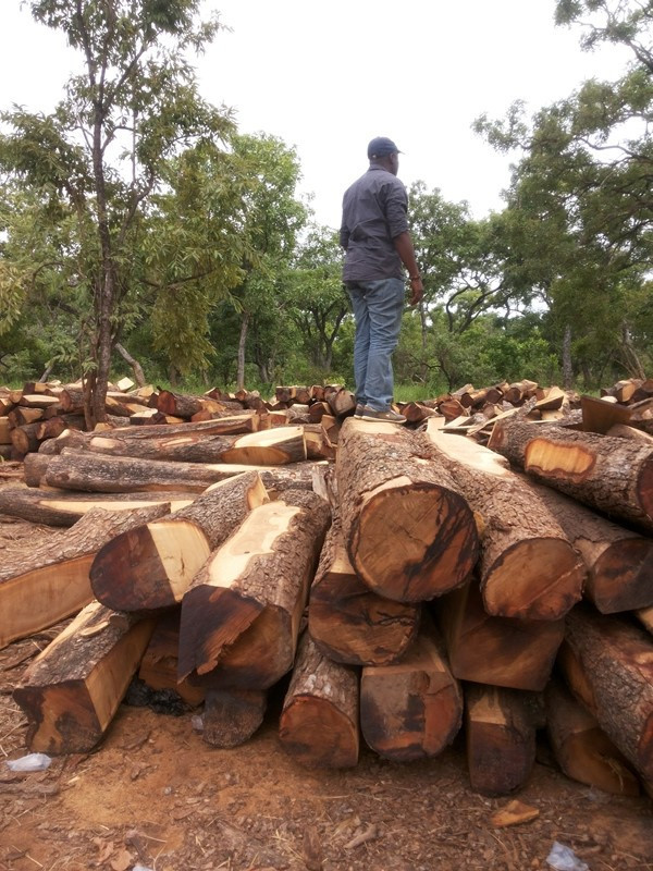 Ghana Rosewood Ghana Rosewood Manufacturers And Suppliers On