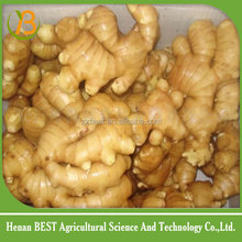 Chinese mature ginger young ginger quality high and fresh