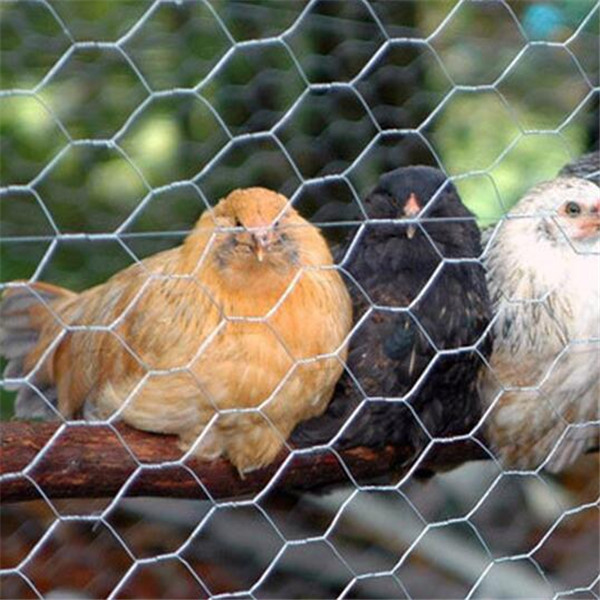 Hot-dipped galvanized or PVC coated hexagonal wire mesh/chicken wire/chicken cage