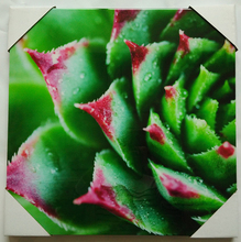 2017 Top selling wall art canvas prints succulent plants paintings