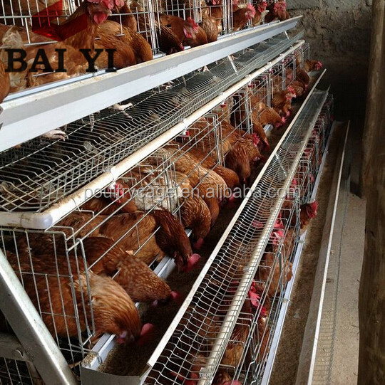 Poultry Battery Large Chicken Breeding Cage For Sale