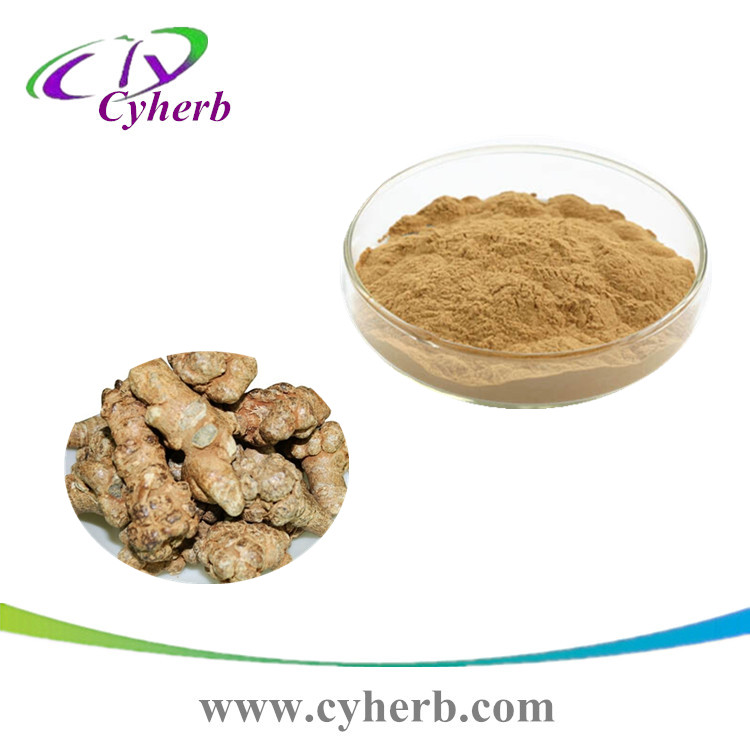 Factory price Supplier best quality Radix Notoginseng Extract/Sanchi Extract powder(Notoginsenosides10%) Ratio: 10:1
