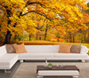 Autumn forest design wallpapers excellent quality murals with full size