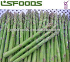 frozen green asparagus IQF Green asparagus tip and cuts