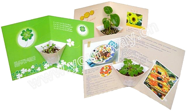 Flower card.Mini plant.Novelty product
