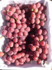 table fresh red globe grapes prices