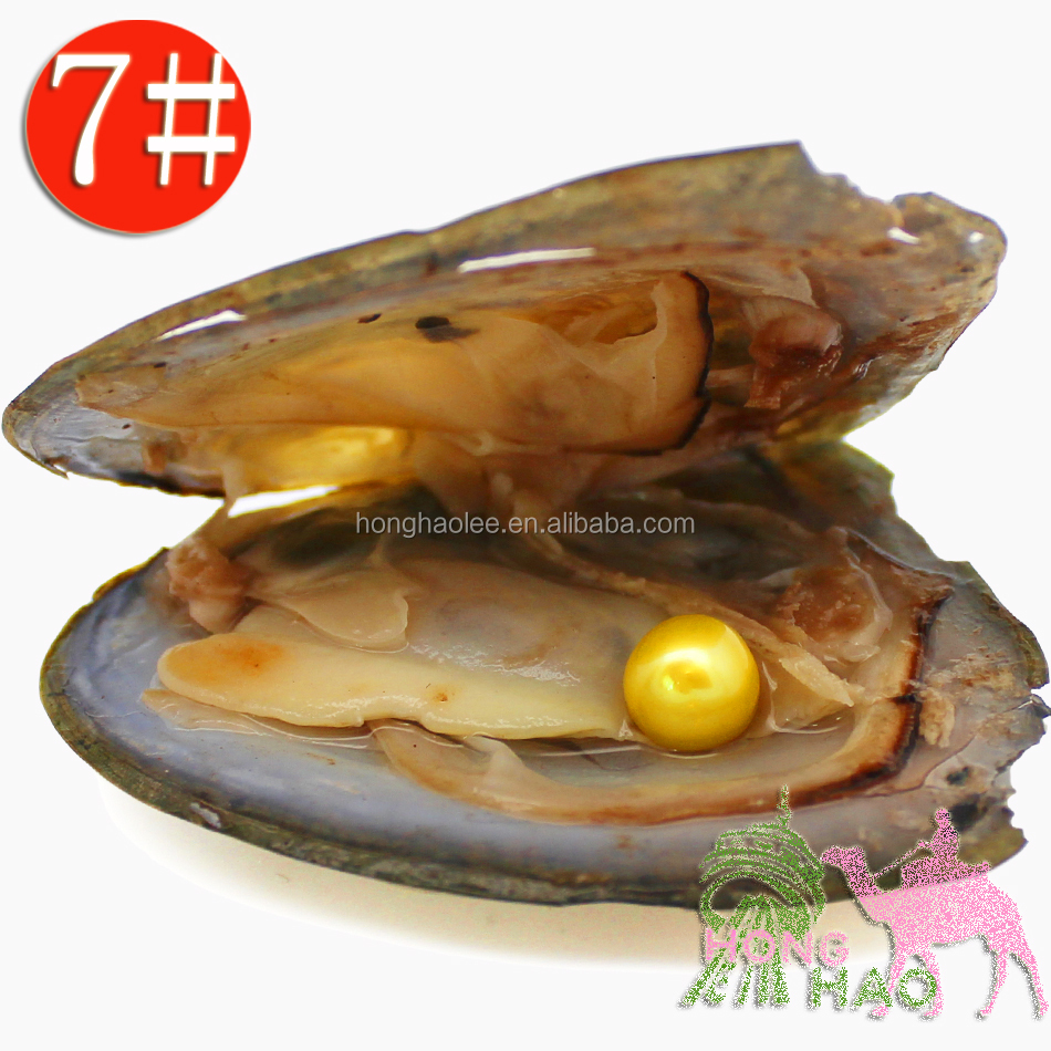 AAAA Grade, Vacuum Packaged Freshwater Triangular Oyster with Pearl #7 Bright Yellow 6-7mm Round Free Shipping фото