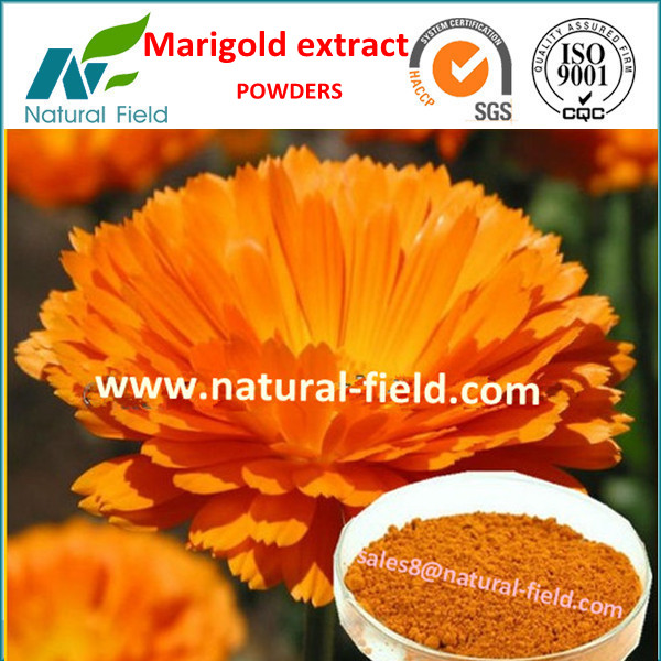 marigold extract powder herbs made in china