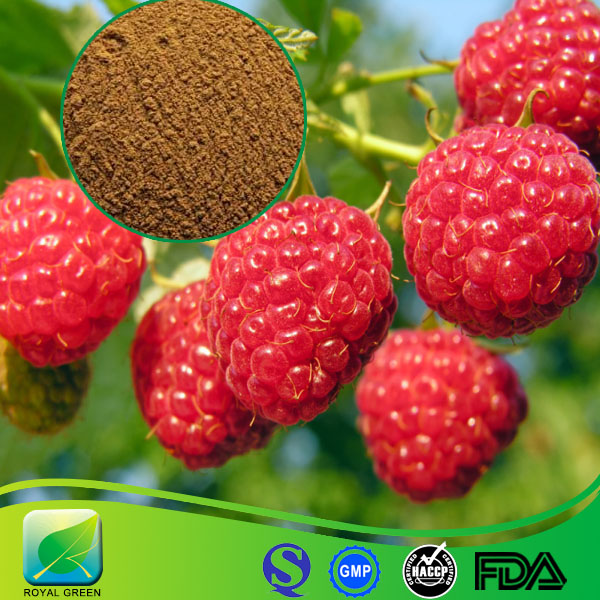 100% natural extract powder Raspberry extract 10:1