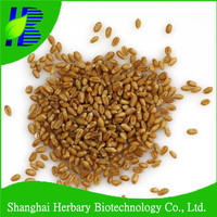 Sale wheat grass seed for home garden