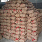 coffee beans packing jute bags