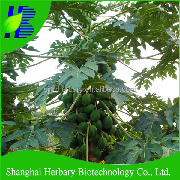 2017 High quality hybrid seeds of papaya for planting