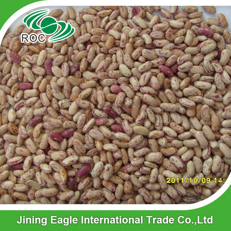 all types of export light speckled kidney bean