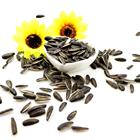 cheap 363 confectionery sunflower seeds dry
