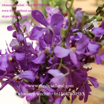 Internationale Bloemist Groothandel Phalaenopsis Orchidee En Japan