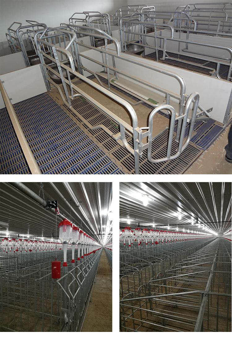 Sow crate design galvanized gestation stall box
