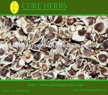 Elite Moringa oilfera for cultivation