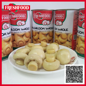 Hot sale top quality best price champignon oyster mushrooms canned mushrooms food stuff of mushrooms