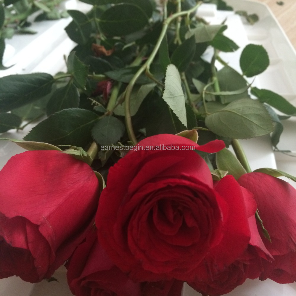 fleurs coupées fraîches roses types de frais rose fleur-fleurs