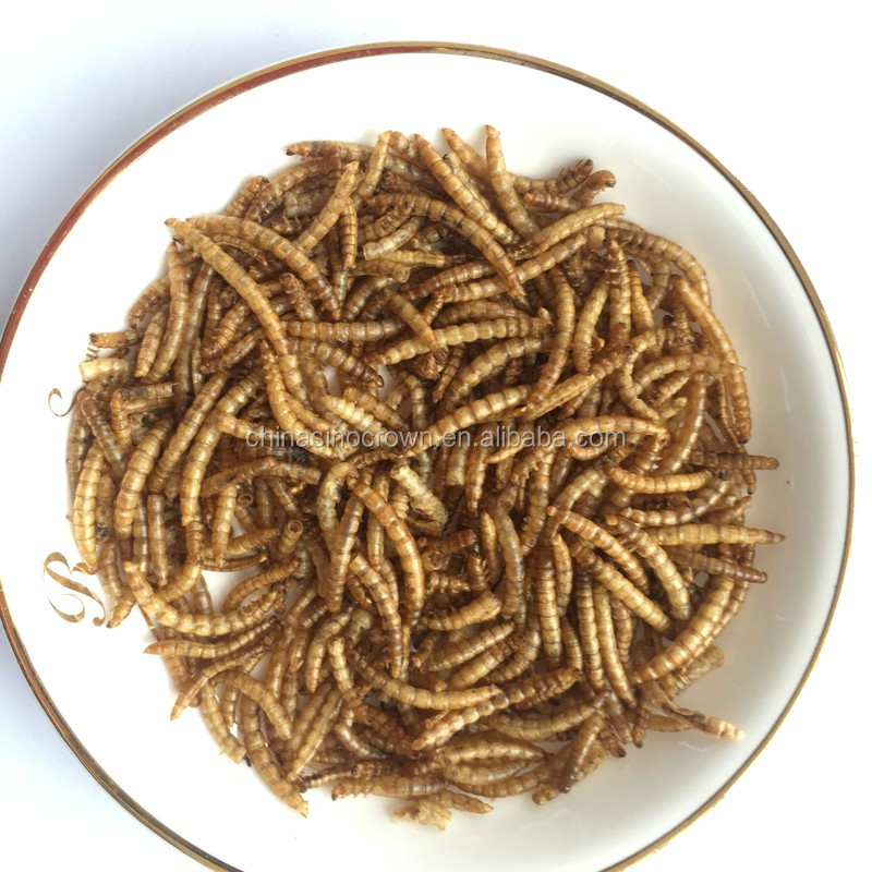 Natural Material Popular <strong>Food</strong> of Premium Edible Insects Dried Mealworms Pupa with High Protein Supplements