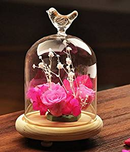 Orilife Decorative Loving bird Clear Glass Apothecary Cloche Bell Jars / Plant Terrarium / Centerpiece Dome Display w/ Wood Base Stand