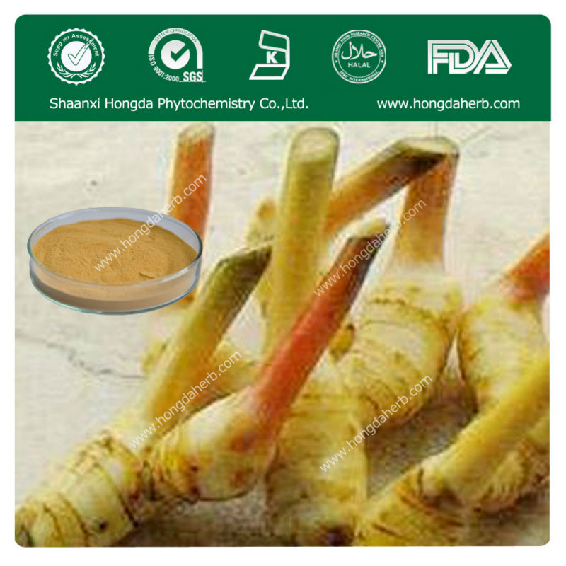 Best Quality and Pure Fresh Lesser Galangal Root Extracts