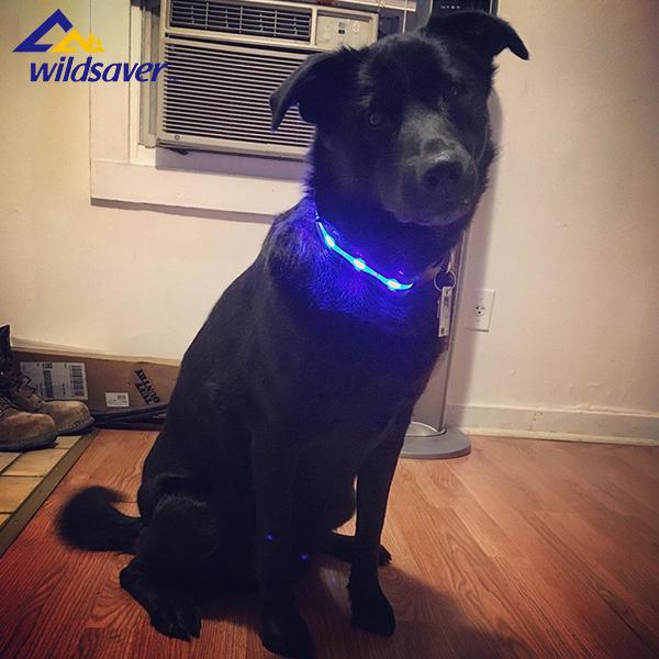 LED dog collar waterproof remote control flashing dog collar with USB& Dog Leash