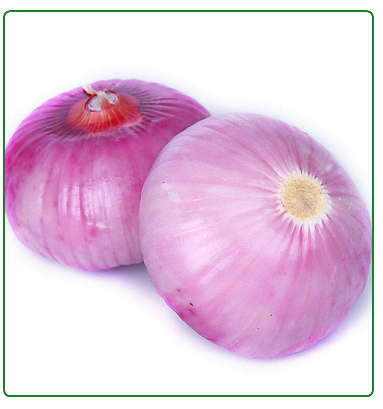 fresh red onion 5-7cm size specification